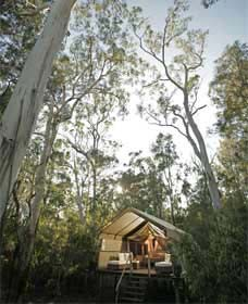 Paperbark Camp - Accommodation Mermaid Beach