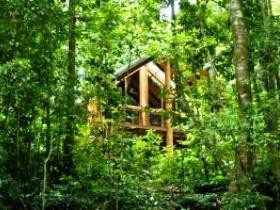 Fur'N'Feathers Rainforest Tree Houses - Accommodation Mermaid Beach