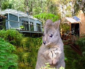 Huon Bush Retreats - Accommodation Mermaid Beach