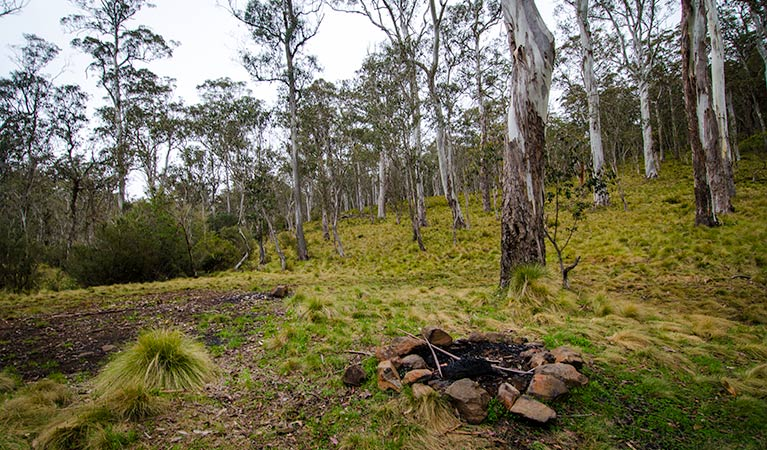 Gummi Falls campground - Accommodation Mermaid Beach