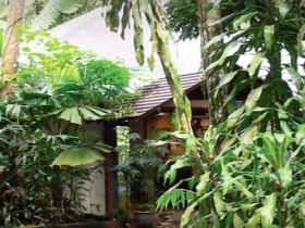Heritage Lodge and Spa - In the Daintree - Accommodation Mermaid Beach