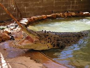 Wyndham Zoological Gardens and Crocodile Park - Accommodation Mermaid Beach