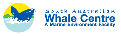 South Australian Whale Centre - Accommodation Mermaid Beach