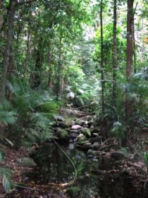 Mossman Gorge Rainforest Circuit Track Daintree National Park - Accommodation Mermaid Beach