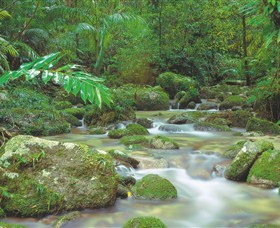 Mossman Gorge Daintree National Park - Accommodation Mermaid Beach