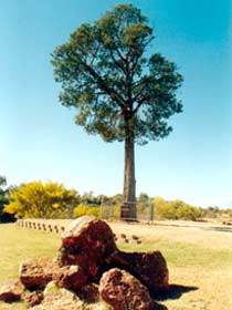 Robbers Tree - Accommodation Mermaid Beach