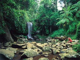 Tamborine National Park - Accommodation Mermaid Beach