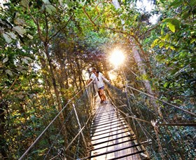 Tree Top Walkway - Accommodation Mermaid Beach