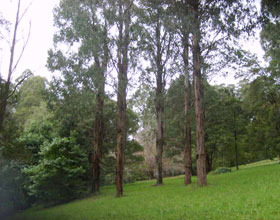 Mount Dandenong Arboretum - Accommodation Mermaid Beach