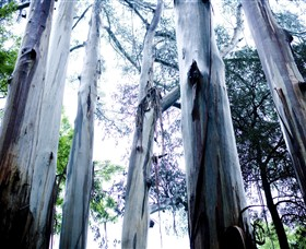 Dandenong Ranges National Park - Accommodation Mermaid Beach