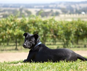 Moothi Estate Vineyard and Cellar Door - Accommodation Mermaid Beach