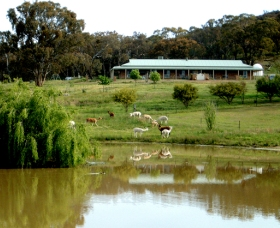 Clearview Alpacas - Accommodation Mermaid Beach