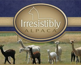 Marchmont Park Alpacas - Accommodation Mermaid Beach