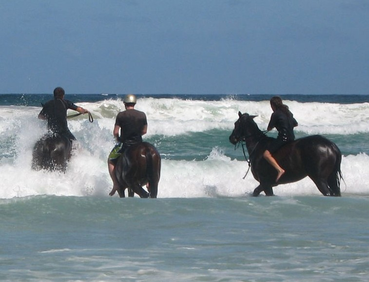 Pegasus Park Equestrian Centre - Accommodation Mermaid Beach