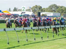Morphettville Racecourse - Accommodation Mermaid Beach