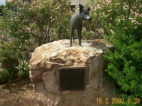 Dingo Statue - Accommodation Mermaid Beach
