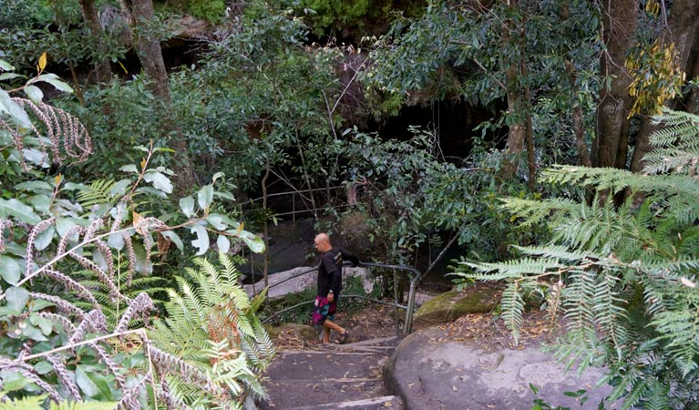 Leura Cascades Fern Bower - Accommodation Mermaid Beach