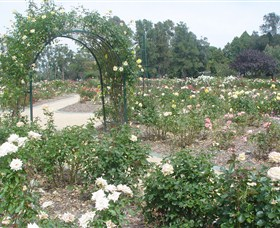 Victoria Park Rose Garden - Accommodation Mermaid Beach
