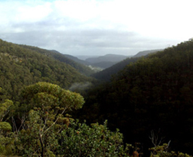 Nattai Gorge Lookout - Accommodation Mermaid Beach