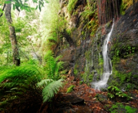 Fairy Bower Falls - Accommodation Mermaid Beach