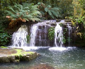 Barrington Tops National Park Walks - Accommodation Mermaid Beach