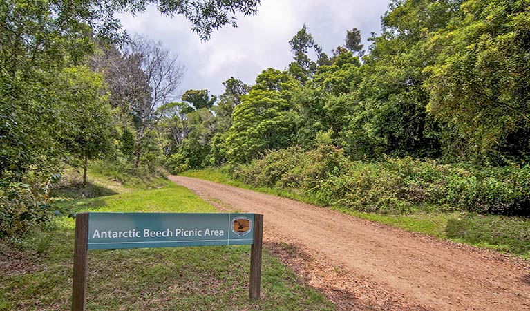 Antarctic Beech picnic area - Accommodation Mermaid Beach