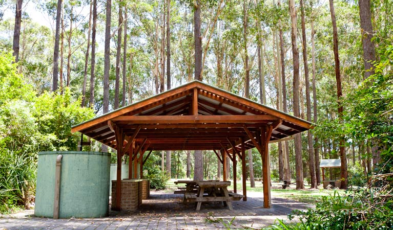 Bongil picnic area - Accommodation Mermaid Beach