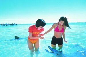 Monkey Mia Dolphins  Shark Bay Air Tour From Perth - Accommodation Mermaid Beach