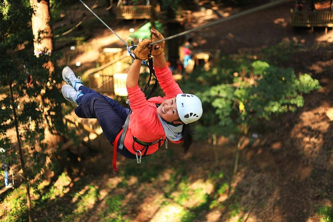 Trees Adventure Lane Poole Park - Treetop  Zipline Experience - Accommodation Mermaid Beach