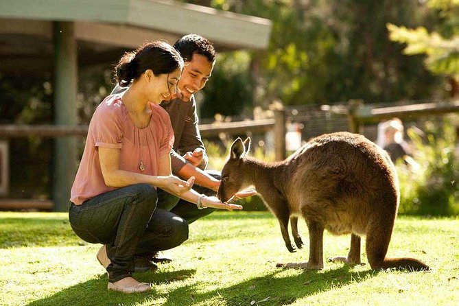 Very Best of Perth Tour - Wildlife Park  City Highlights Tour - Accommodation Mermaid Beach
