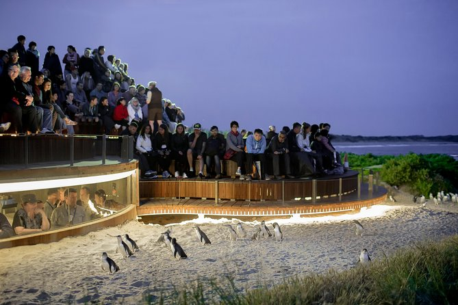 1 Day Private Phillip Island Tour VIP Charter up to 9 People - Accommodation Mermaid Beach