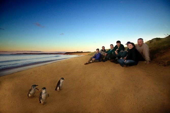 Phillip Island Ultimate Penguin Eco Tour or Skybox Experience - Accommodation Mermaid Beach