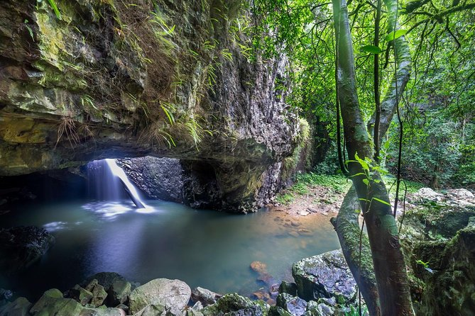 Springbrook and Tamborine Rainforest Tour Including Natural Bridge and Glow Worm Cave - Accommodation Mermaid Beach