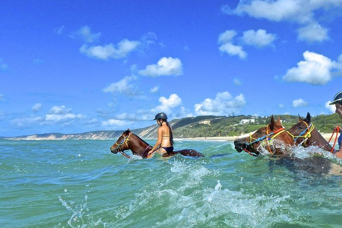 Horse Swimming Ride from Rainbow Beach - Accommodation Mermaid Beach