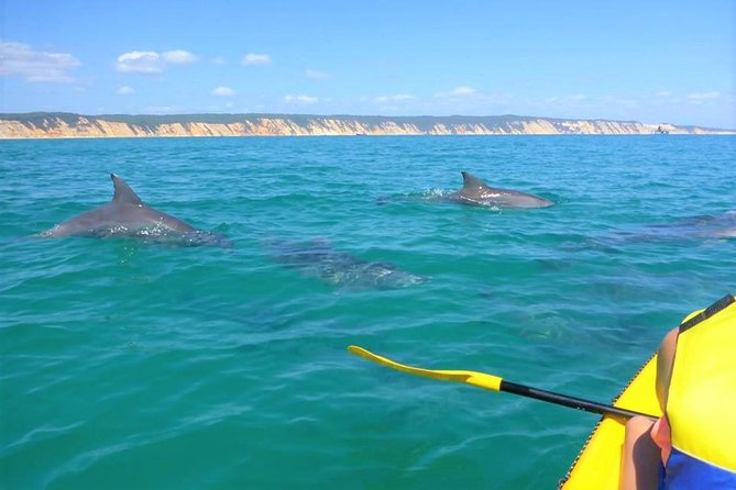 Half-Day Kayak with Dolphins and 4WD Beach Drive from Rainbow Beach - Accommodation Mermaid Beach