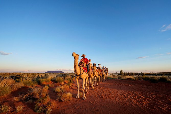 Uluru Camel Express Sunrise or Sunset Tours - Accommodation Mermaid Beach
