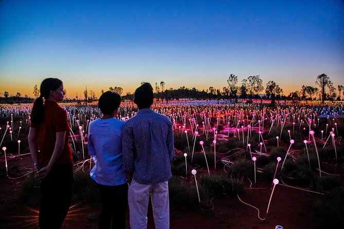 Uluru Field of Light Sunrise Tour - Accommodation Mermaid Beach