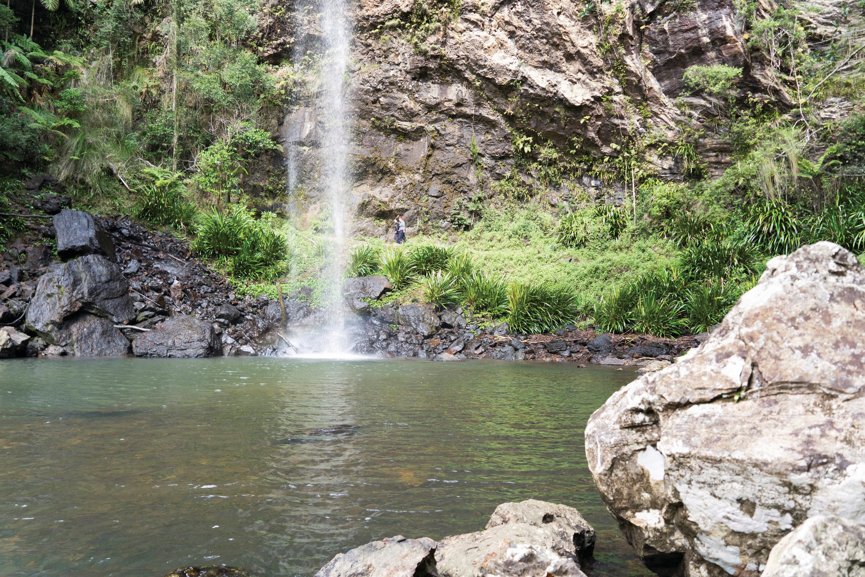 Twin Falls Circuit Springbrook National Park - Accommodation Mermaid Beach