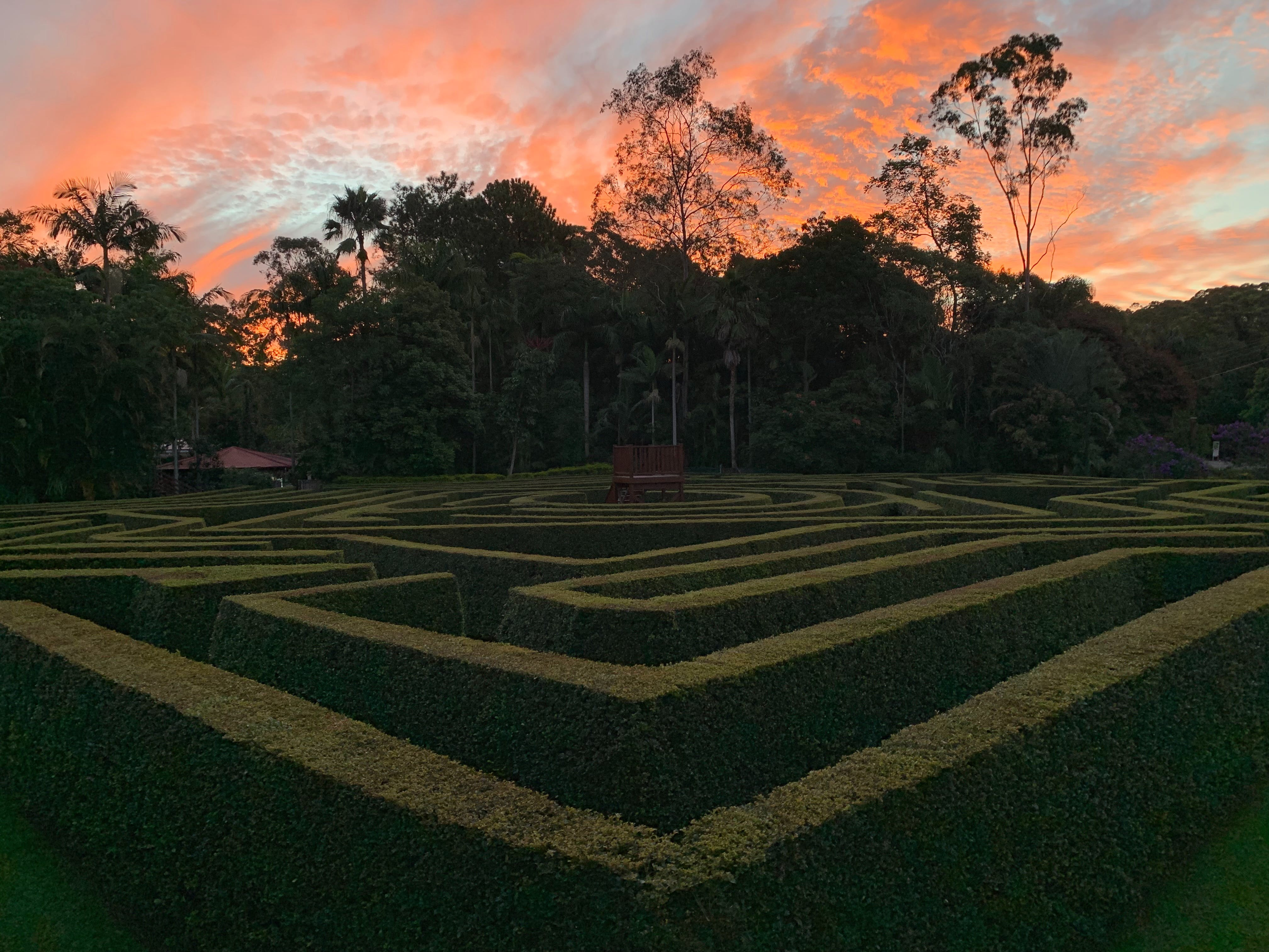 Bellingham Maze - Accommodation Mermaid Beach