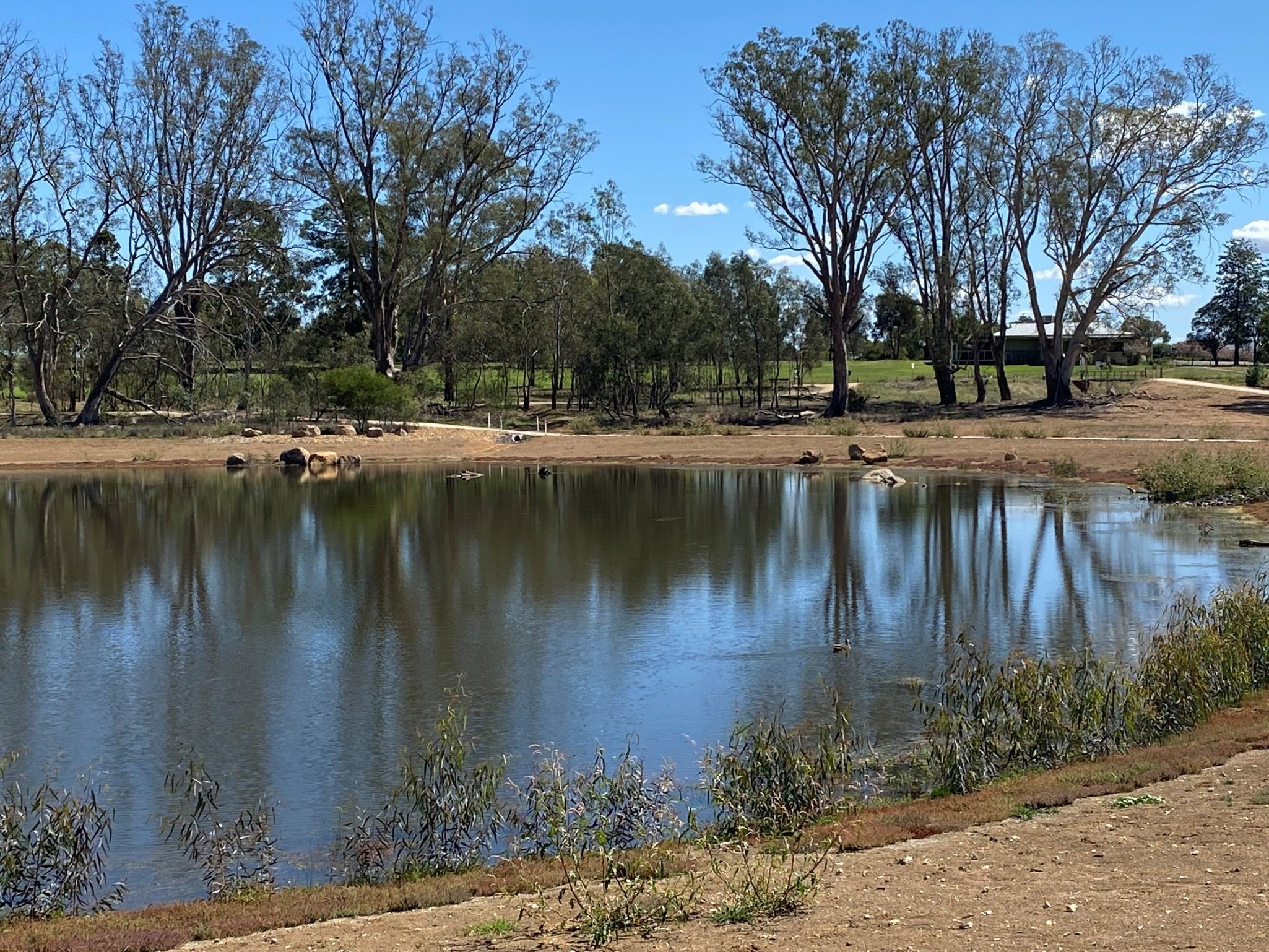 Lake King Wetlands at Rutherglen - Accommodation Mermaid Beach