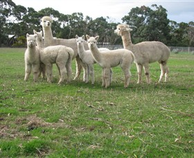 Blackgate Lodge Alpaca Stud