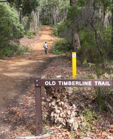 Old Timberline and Sidings Rail Trails - Accommodation Mermaid Beach