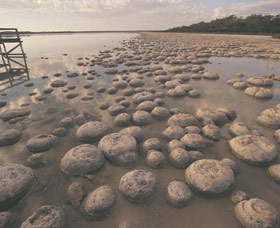 Lake Clifton Thrombolites - Accommodation Mermaid Beach