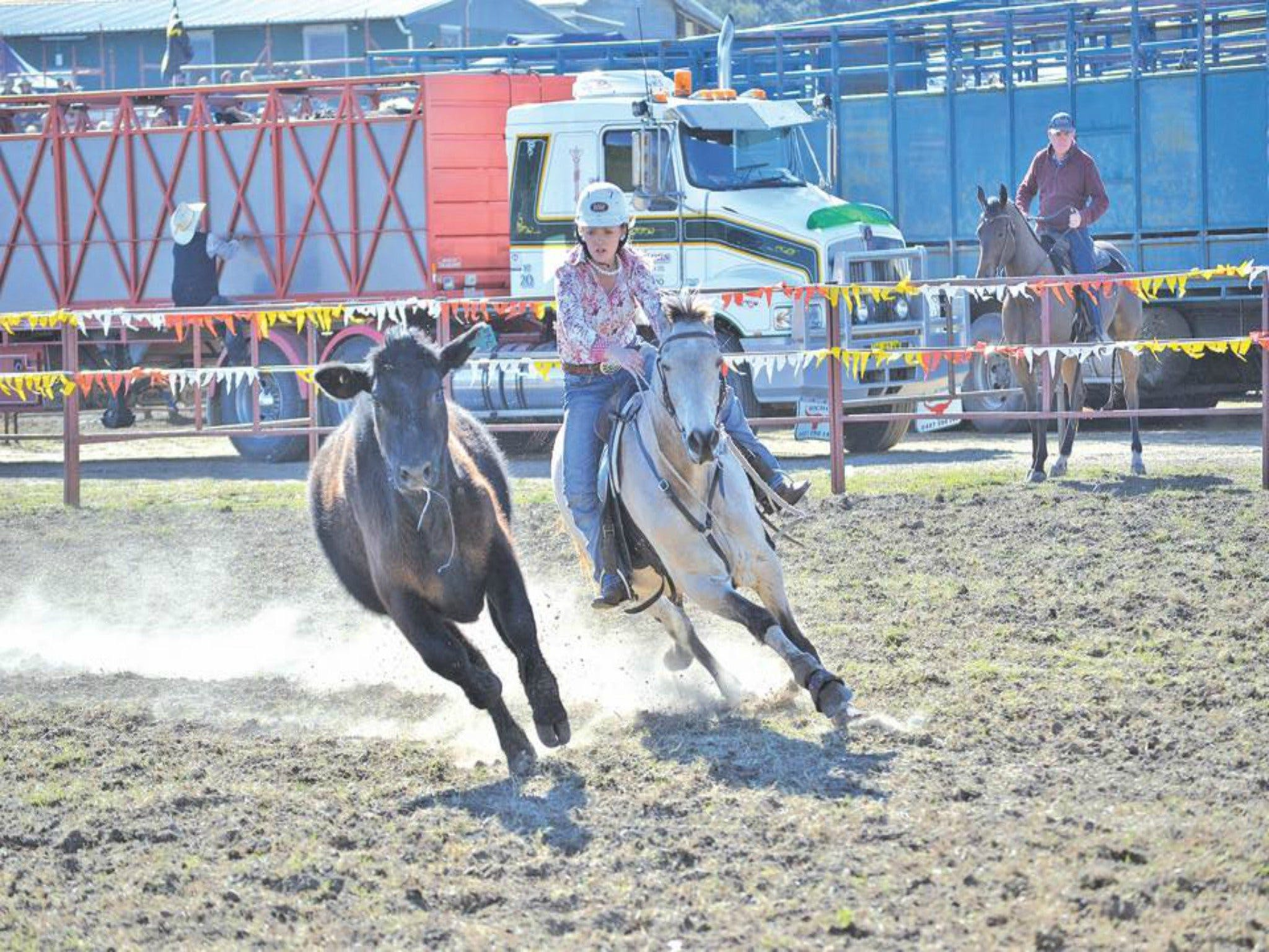 Gresford  Campdraft and Rodeo - Accommodation Mermaid Beach